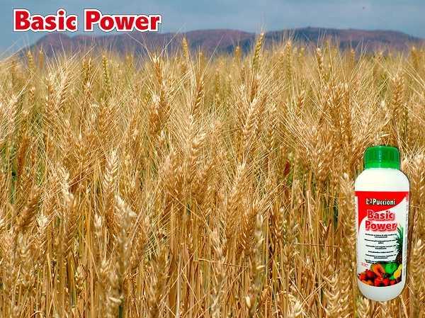 Basic Power naturalny biostymulator (1)