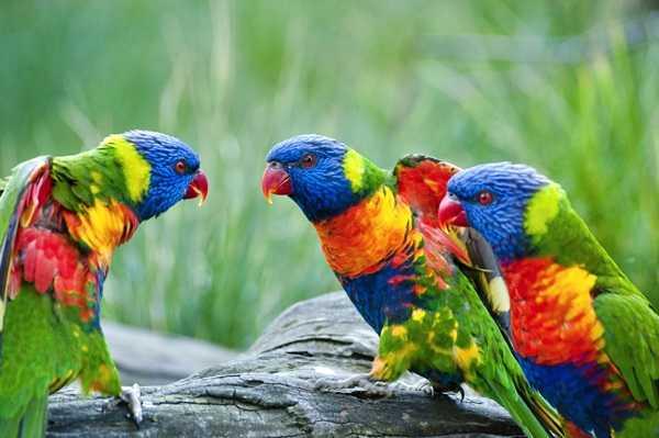 kaszuby Zoo Egzotyczne Kaszuby atrakcje